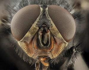 eyes-bug